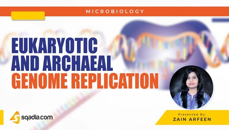 Eukaryotic and Archaeal Genome Replication