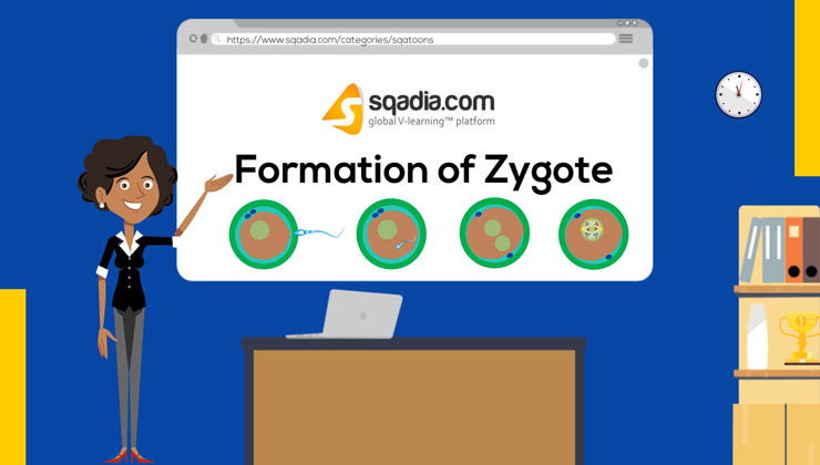 Formation of Zygote