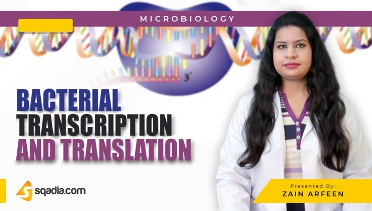 BacterialTranscription and Translation