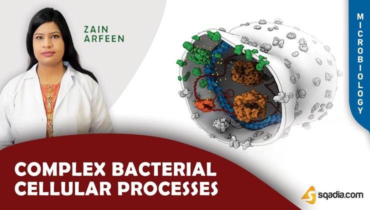 Complex Bacterial Cellular Processes