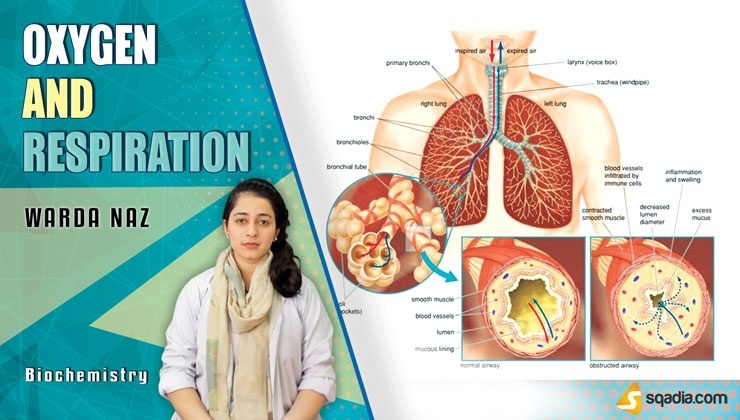 Oxygen and Respiration