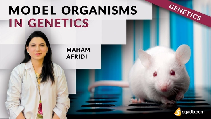 Model Organisms in Genetics