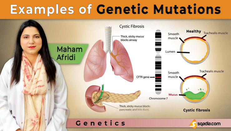 Examples of Genetic Mutations