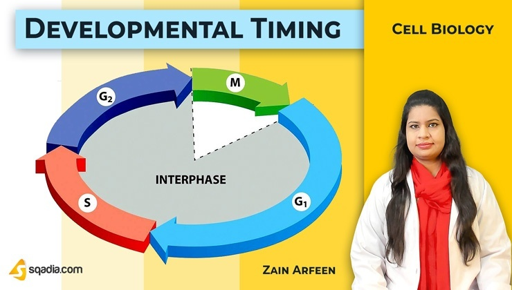 Developmental Timing