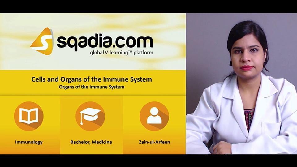 Dbifxftwqtukptwfpdkz 171107 s3 arfeen zain organs of the immune system