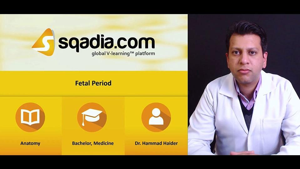P6zkctsyq92qsosrwdq9 181206 s0 haider hammad fetal period intro