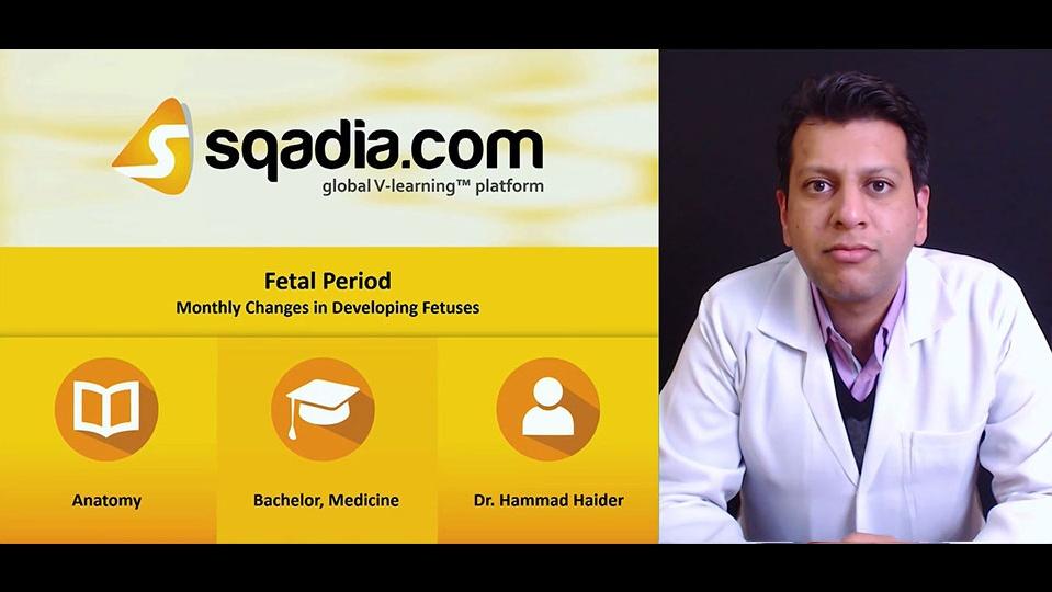 Rvbg6upoqjgi7bd8rlta 181206 s2 haider hammad monthly changes in developing fetuses
