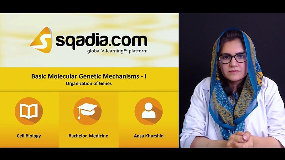Lxmfixkbrvunhmosn1zb 180503 s4 khurshid aqsa organization of genes
