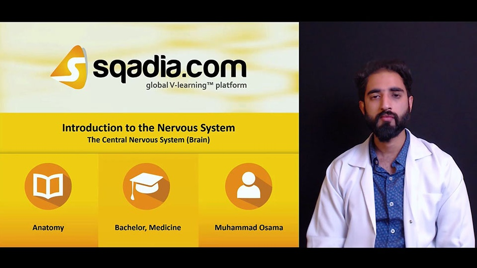 Aegmw4rq4cz0yuzz9tcf 180508 s3 osama muhammad central nervous system brain