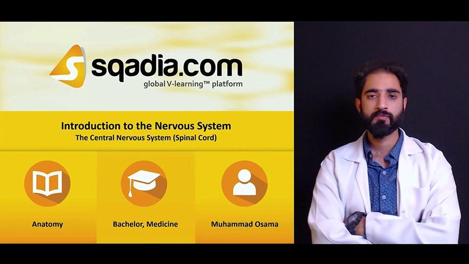 Stevcaf5shqmjzjevgty 180508 s4 osama muhammad central nervous system spinal cord
