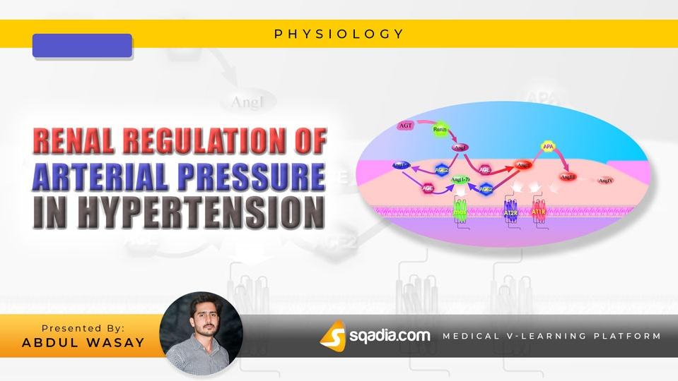 Data 2fimages 2fjgbg3za1sfksqohfqgap 180623 s0 wasay abdul renal regulation of arterial pressure in hypertension intro