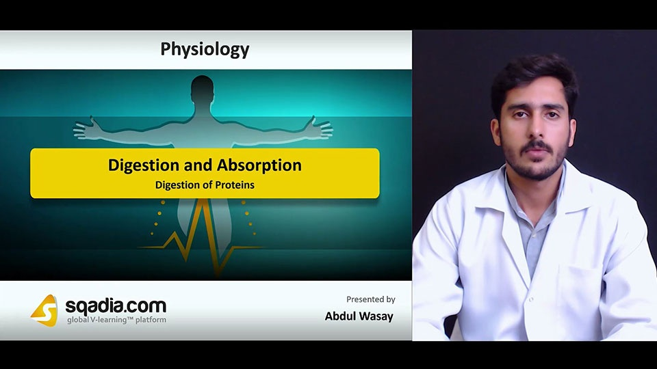Hwzgnvyysy7syodytdj6 180711 s3 wasay abdul digestion of proteins