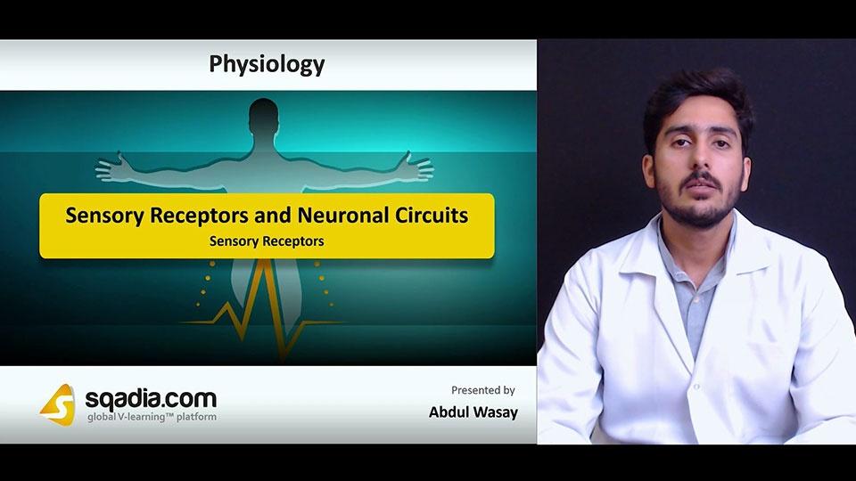 Ezgbnjwro2i9pcfjdi3a 180711 s1 wasay abdul sensory receptors