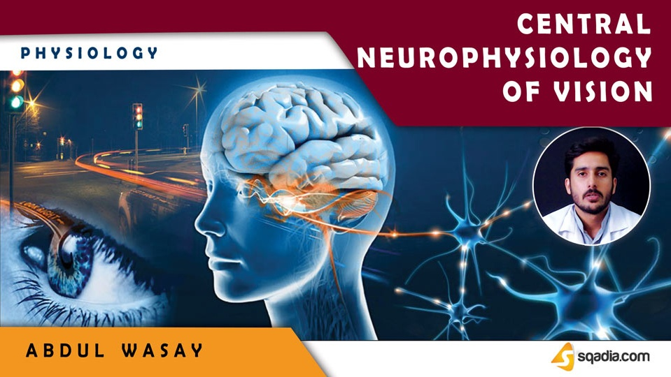 Data 2fimages 2fakwy8lrtfixxsstkv1pw 180718 s0 wasay abdul central neurophysiology of vision intro