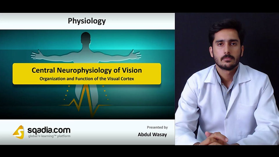 8bujaaezs7qt7bs1hnlm 180718 s2 wasay abdul organization and function of the visual cortex