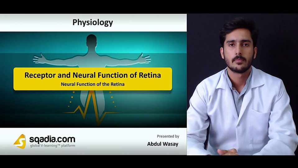 Hvdwmchksxy7wf34iqqf 180718 s5 wasay abdul neural function of the retina