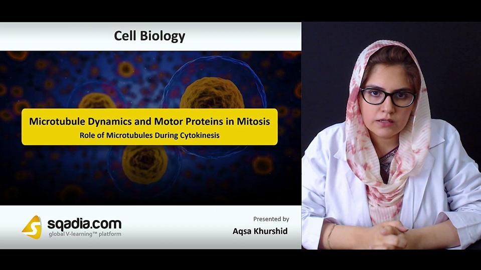 Kozoyn5orvwbkrbiu7zq 180719 s5 khurdhid aqsa role of microtubules during cytokinesis