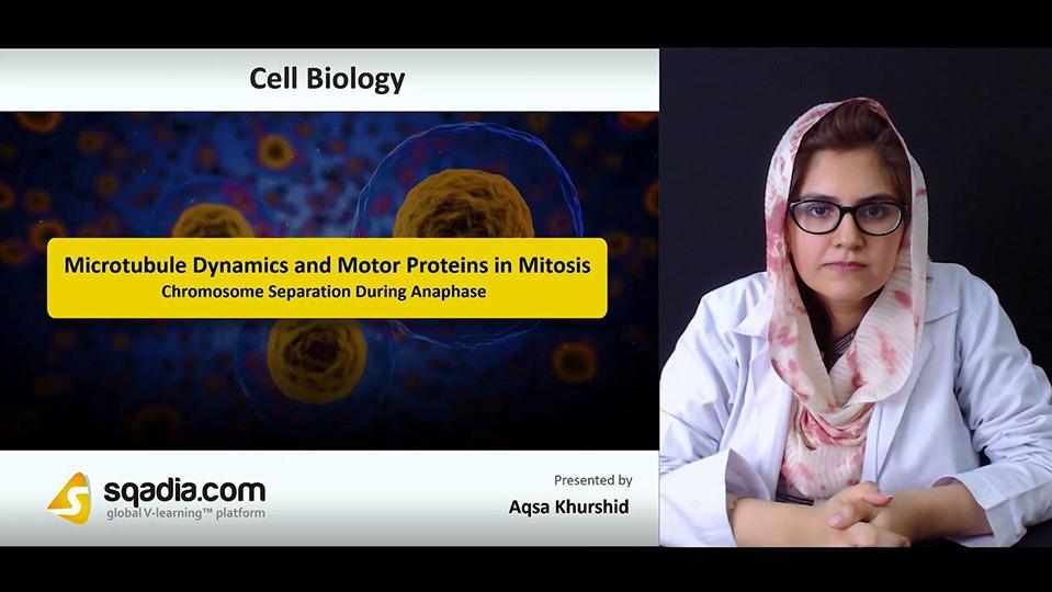 Rgjrn4awqfuhtwngxlhp 180719 s4 khurdhid aqsa chromosome separation during anaphase