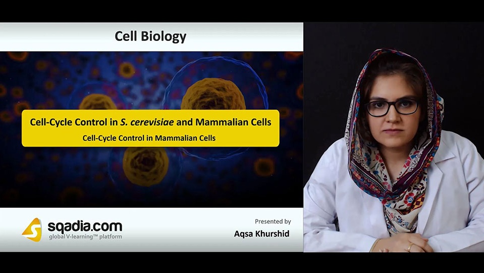 F16t4algsgqexjppkxg0 180728 s3 khurshid aqsa cell cycle control in mammalian cells
