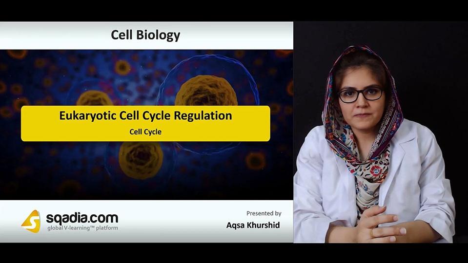 Sngvhjymtvwm6g3reneb 180728 s1 khurshid aqsa cell cycle