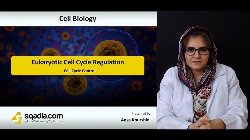 D3tqnuj2rcokdjoui8pt 180728 s2 khurshid aqsa cell cycle control
