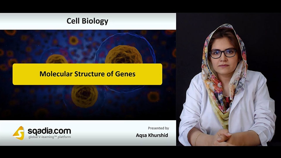 Kirrtrvpreqamofqzgct 180810 s0 khurshid aqsa molecular structure of genes intro