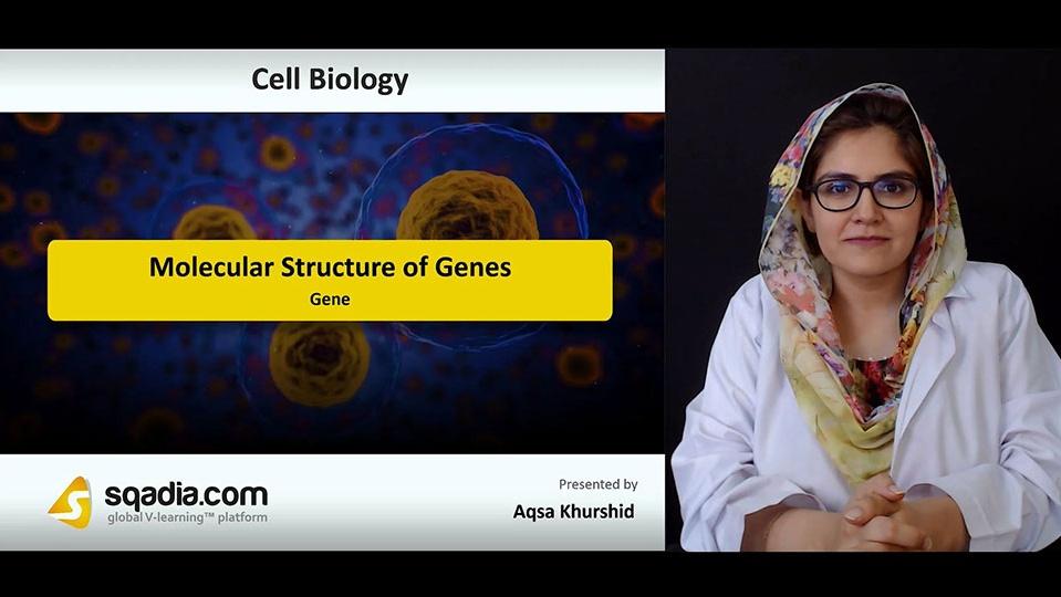 Ttg0fvhgrrqpcdtqyo7i 180810 s1 khurshid aqsa gene