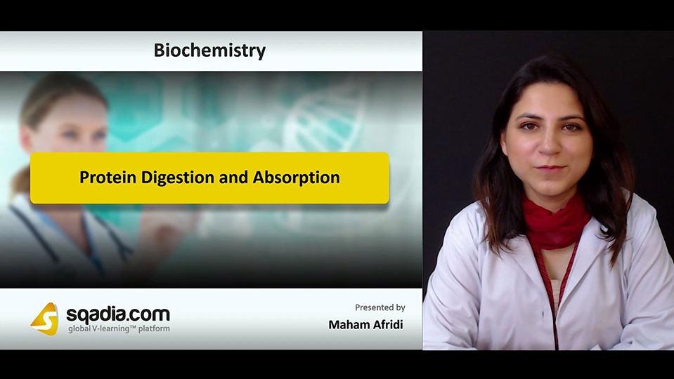 Pc2b7eqmog3pxrqqd6aq 180811 s0 afridi maham protein digestion and absorption intro