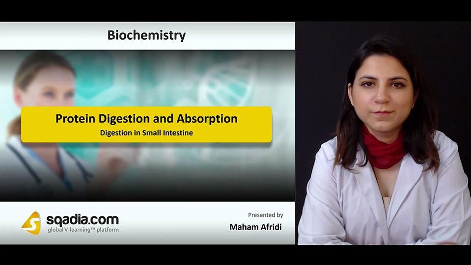 6xyafj01smnbcljcdofe 180811 s4 afridi maham digestion in small intestine