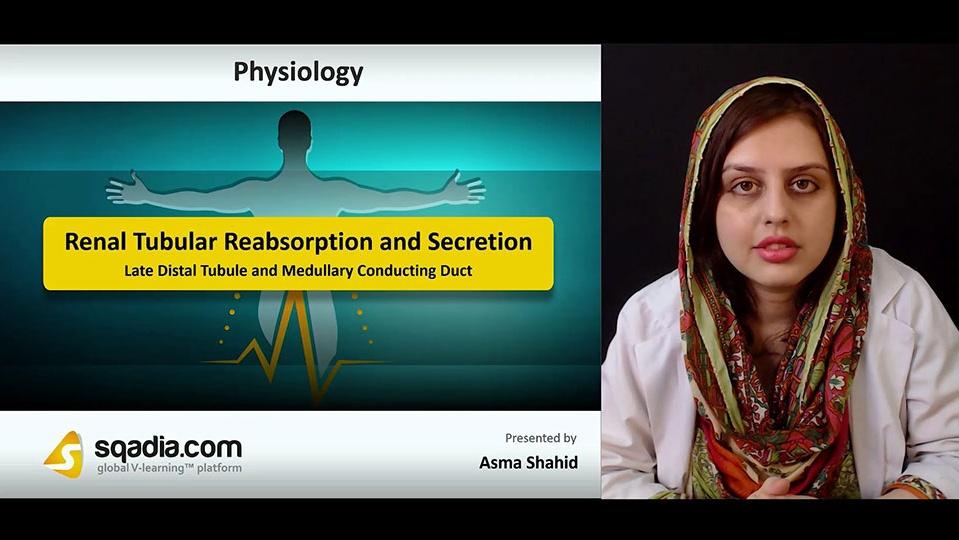 I07kna3lquctxmugx7ks 180818 s3 shahid asma late distal tubule and medullary conducting duct