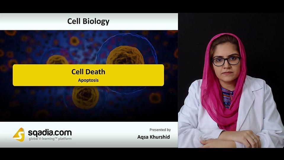 Lxosektra2ekeogh23cv 180906 s1 khurshid aqsa apoptosis
