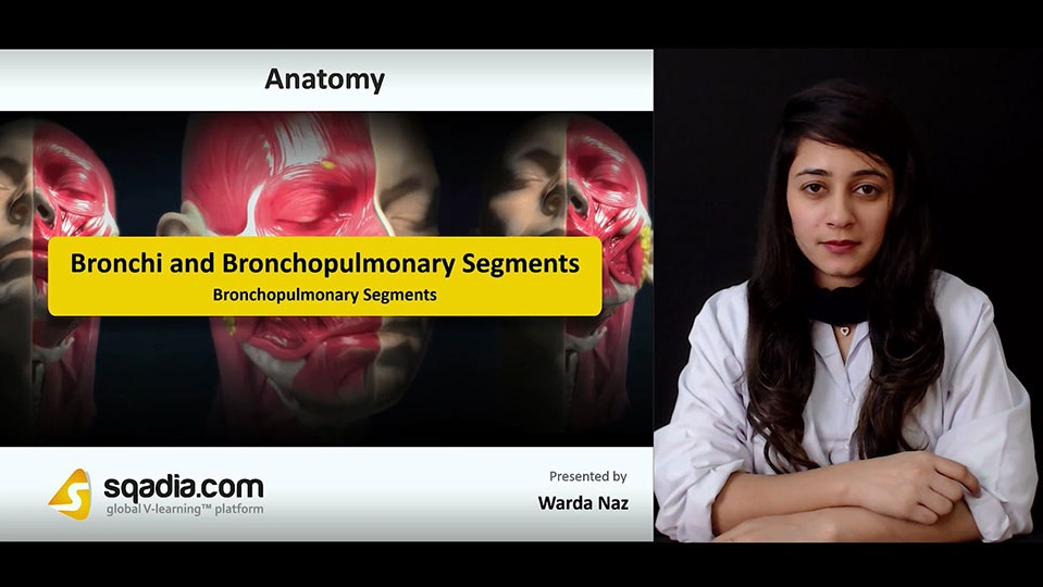 Data 2fimages 2fy1d7fhexthqgo6ybpb1p 180914 s3 naz warda bronchopulmonary segments