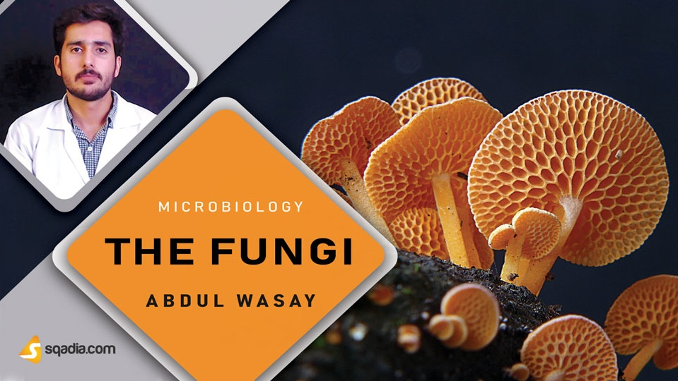 Data 2fimages 2fjeoqyuyrtnsnnhhwbngs 180919 s0 wasay abdul the fungi intro