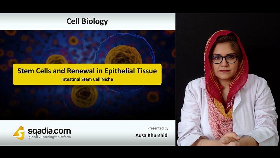 Data 2fimages 2f38te8xyzt0yg505f08dg 180927 s3 khurshid aqsa intestinal stem cell niche