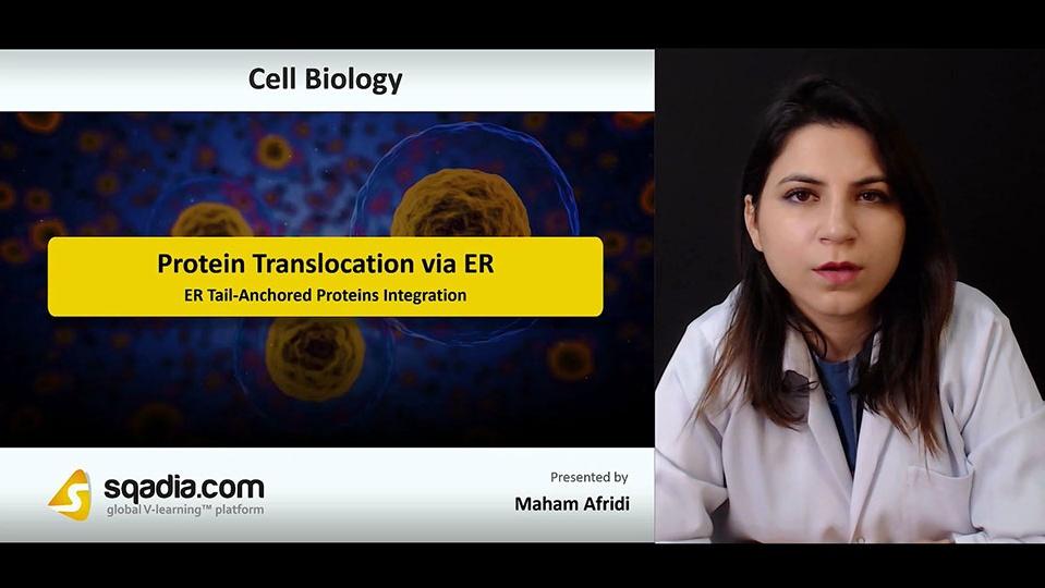 Data 2fimages 2fpti42vl1r4eif6txaucn 180928 s1 afridi maham er tail anchored proteins integration