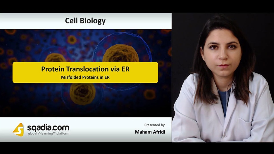 Data 2fimages 2fws0yjkkcqaoqjp5rdkut 180928 s4 afridi maham misfolded proteins in er