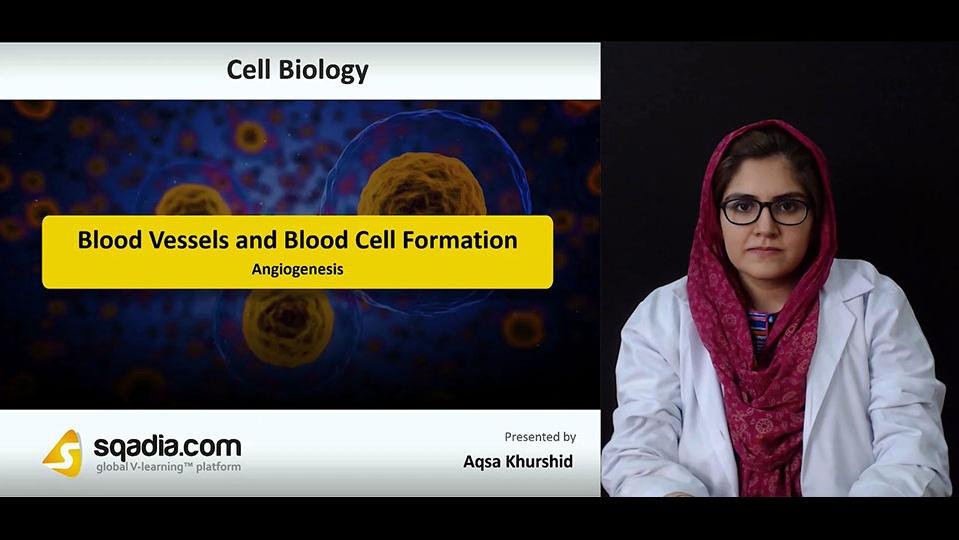 Data 2fimages 2fk4eidm7rgg24ehzibysf 181004 s2 khurshid aqsa angiogenesis