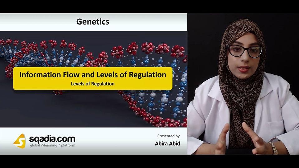 Data 2fimages 2fyhwzlajwtyycwb45shjb 181006 s2 abid abira levels of regulation