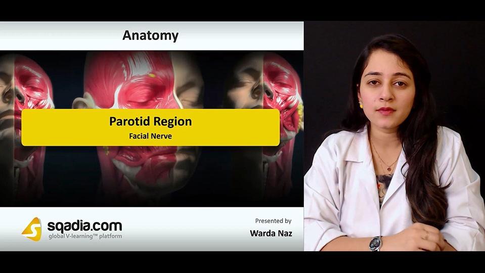 Data 2fimages 2fpqcnu46sdce6wl2pfywo 181023 s2 naz warda facial nerve