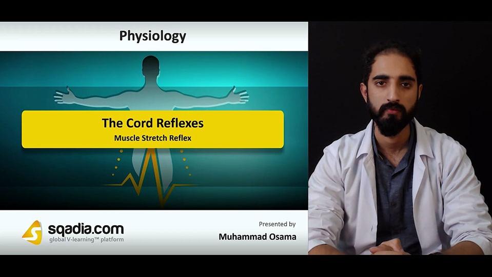 Data 2fimages 2fgffiymymtewahoegqizo 181101 s3 osama muhammad muscle stretch reflex