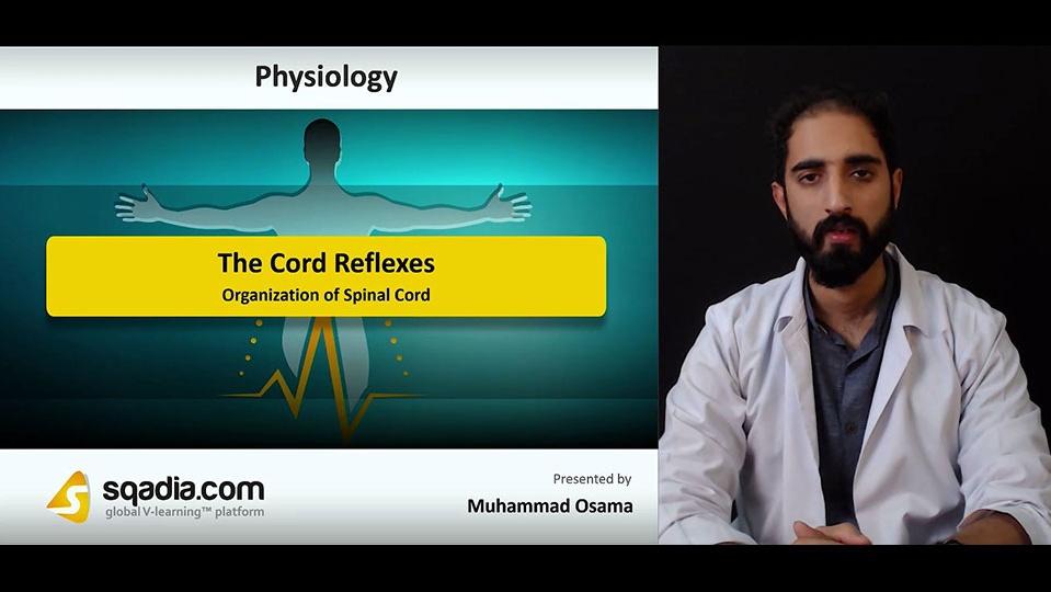 Data 2fimages 2fl0jnmwdftg2cgxmda6fb 181101 s1 osama muhammad organization of spinal cord