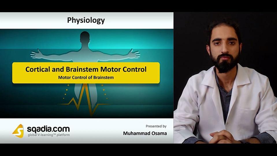 Data 2fimages 2fizoybm3r1kjsw2kdmefq 181108 s4 osama muhammad motor control of brainstem