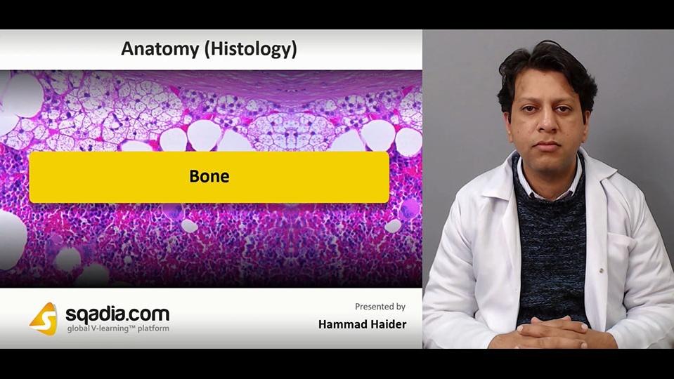 Data 2fimages 2fqucyv5ebrcinkbwjg3ur 181130 s0 haider hammad bone intro