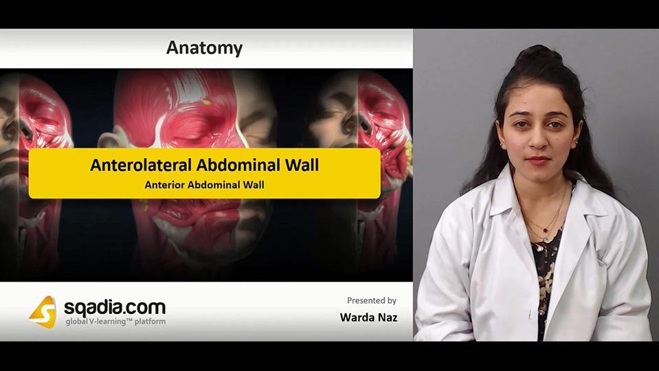 Data 2fimages 2fhwt1gkxwqjh4iyt3e4qp 181214 s4 naz warda anterior abdominal wall
