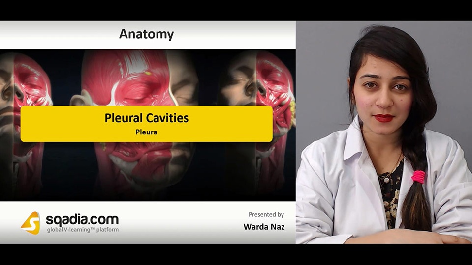 Sqadia Pleural Cavities Human Anatomy Lecture Medical V