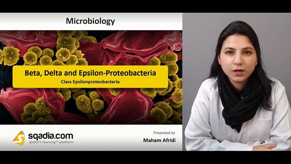 Data 2fimages 2flgv15i3otn6l3gdmbbod 181226 s5 afridi maham class epsilonproteobacteria