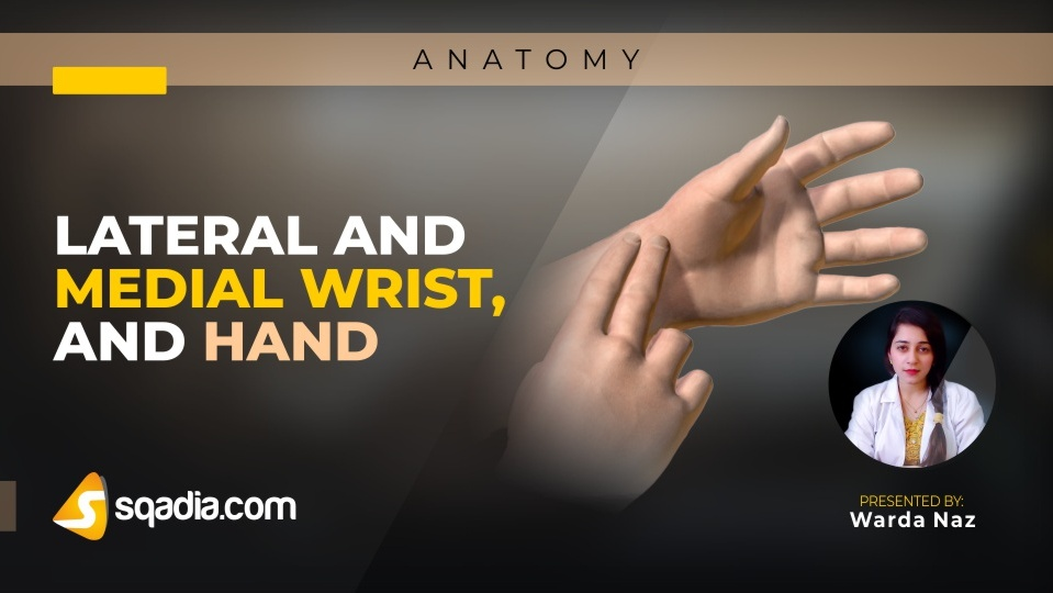 Data 2fimages 2fgvy0zvqztr6benevvcai 181228 s0 naz warda lateral and medial wrist and hand intro