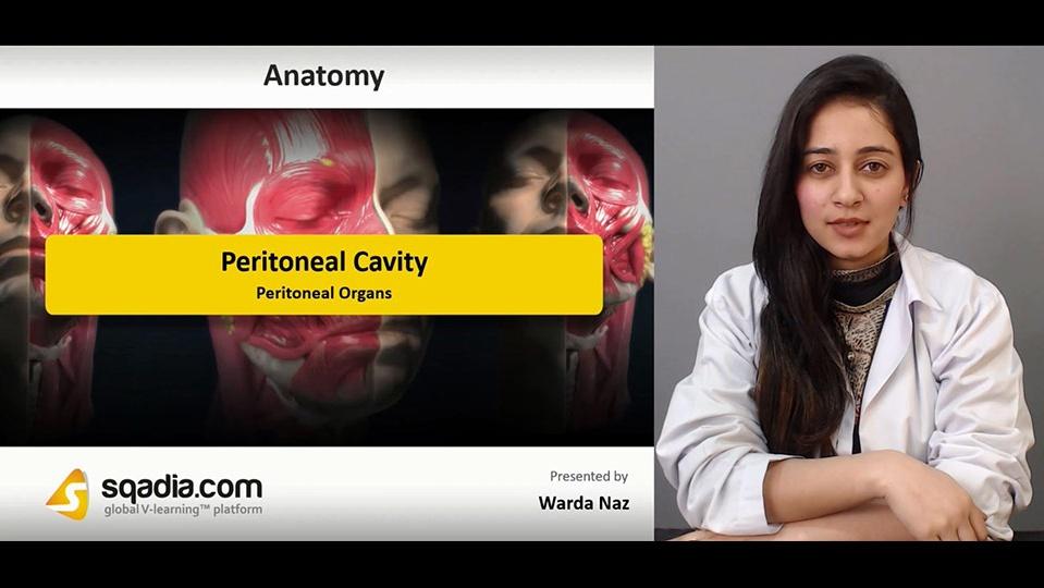 Data 2fimages 2fx4nwaedxql6jp8psmldy 181228 s4 naz warda peritoneal organs