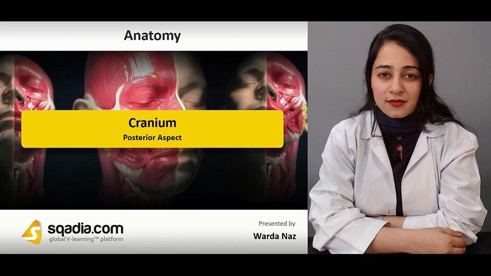 Data 2fimages 2fm0wxmsaftby6txuqhkxm 190104 s4 naz warda cranium posterior aspect