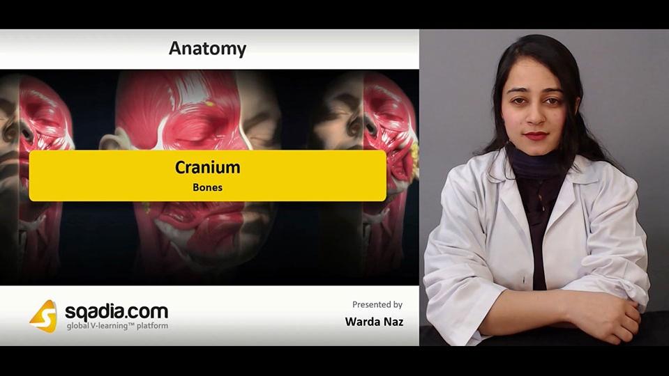 Data 2fimages 2fyvqb6jmrs0czvxta92i3 190104 s1 naz warda cranium bones